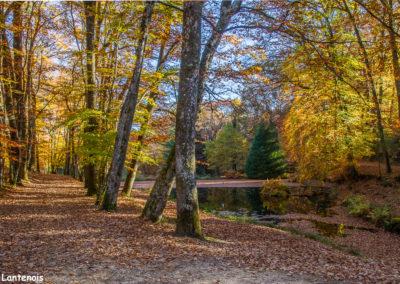 Sous-bois Limousin-Forêt des Loges
